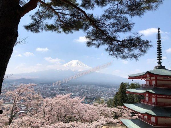 sakura_Mt.Fuji
